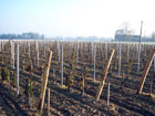 vin  visite  vente  garonne  sec  saint pardon  degustation  panorama  vinification  groupe